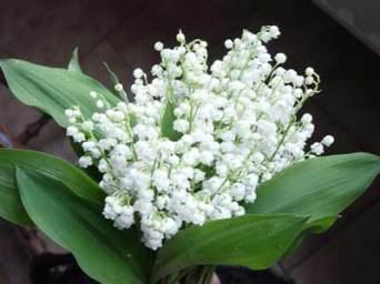 muguet bouquet