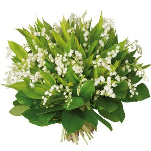 Le Muguet Du 1er Mai May 1st Lilly Of The Valley French