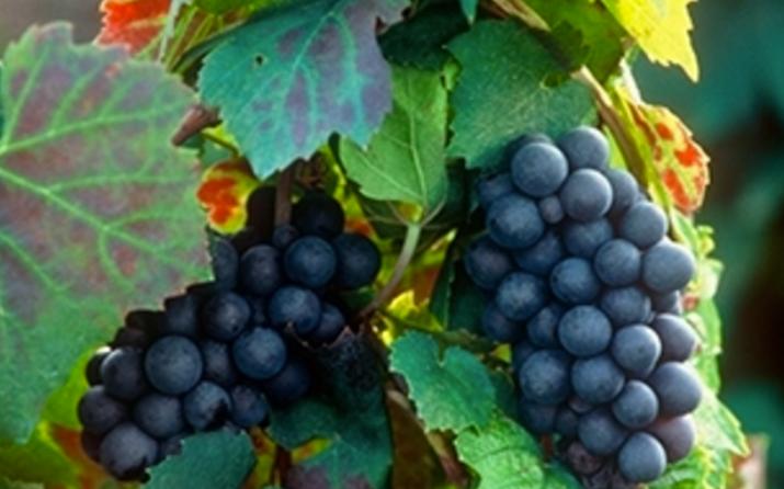 Les vins Georges Duboeuf